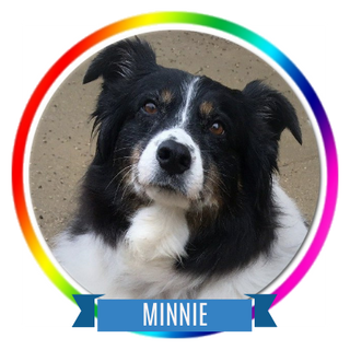 Minnie Memorial Page Icon.png
