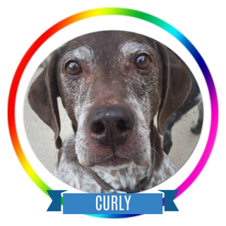 Curly Memorial Page Icon.png