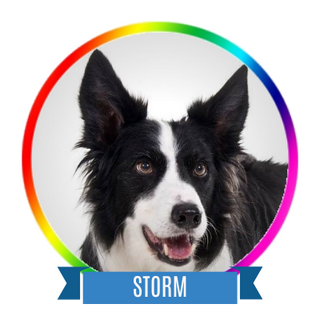 Storm Memorial Page Icon.png