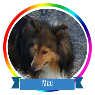 Mac Icon.png