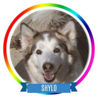 Shylo Memorial Page Icon.png