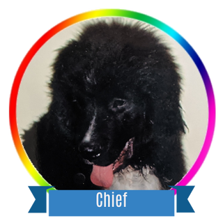 Chief Icon.png