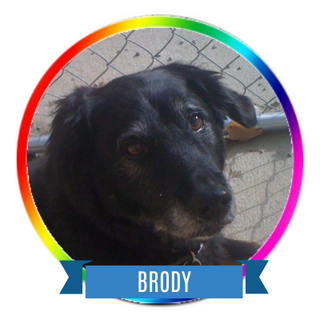 Brody Icon.png