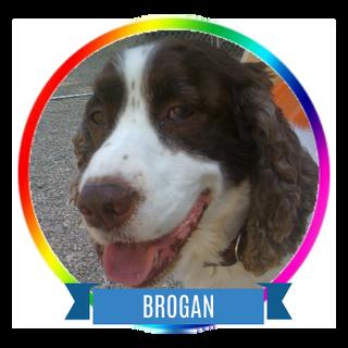 Brogan.png