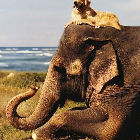 The Elephant and The Dog