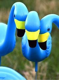 three_flamingos_1.jpg