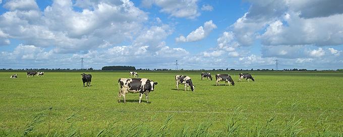 Grass measuring on Irish farms