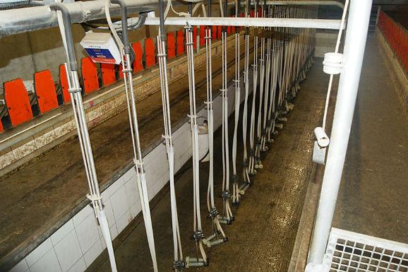 Farming blog focus: goat farming