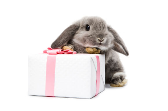 Easter Competition!