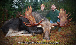 Moose Hunt Maine