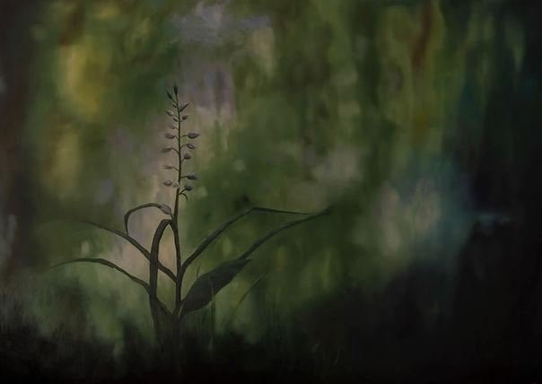 Orchidée (2).jpg