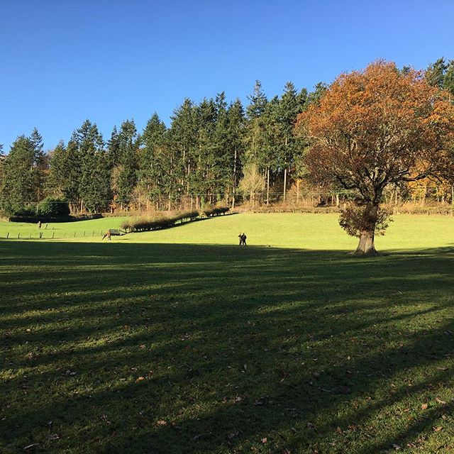 A great day at Vaynor park today #infieldtuition #gameshooting #mcphersonshooting #wales #bettwshall