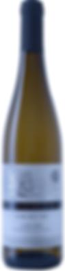 האלון הבודד גוורצטרמינר 2017 - רקע לבן 2