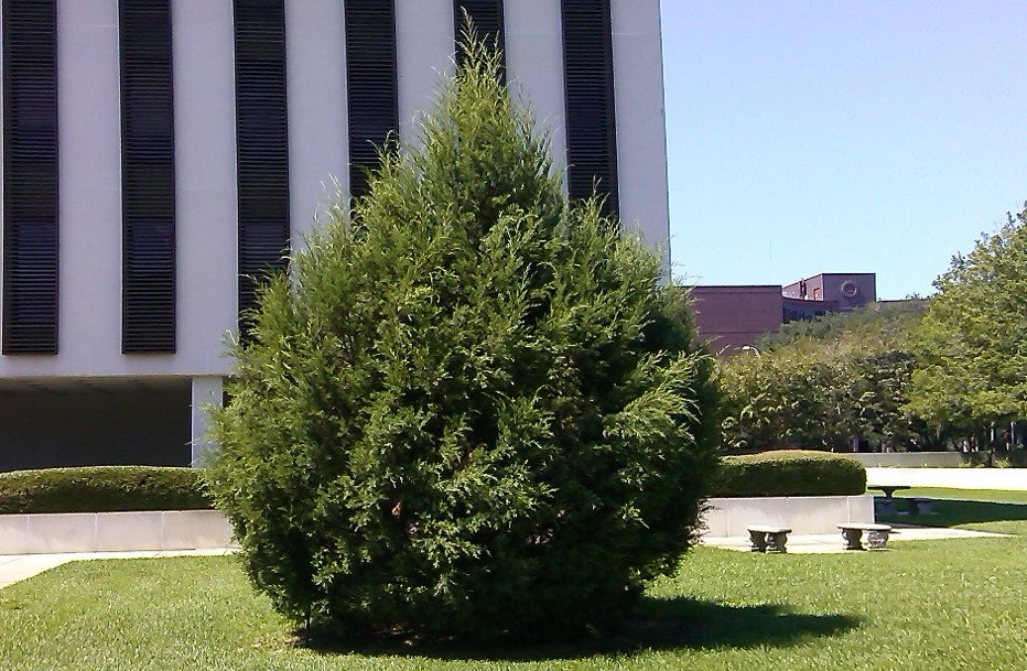 State of Florida Christmas Tree