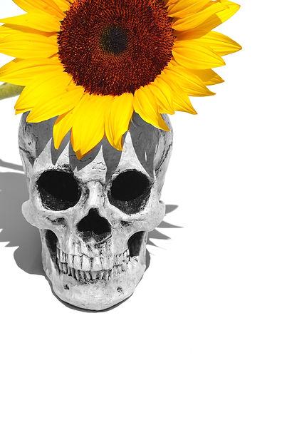 Skull & Sunflower
