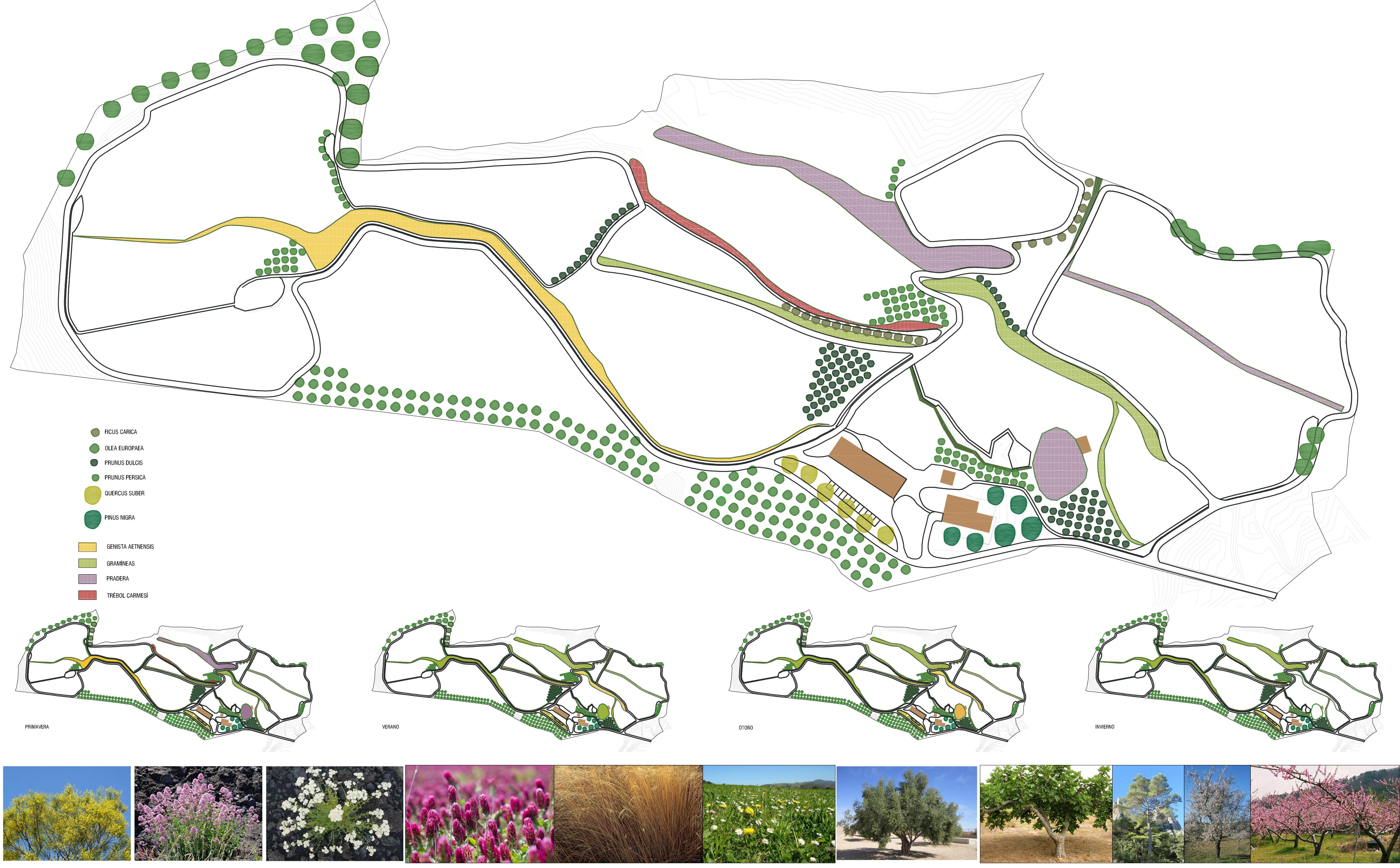 planta_general_de_vegetación