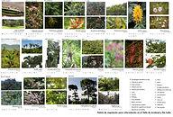 paleta de vegetacion investigacion paisajismo