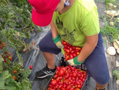 Settimana #7 - Grandi lavori in fattoria