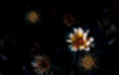 Bright flowers in a dark garden with Photoshop effetcs