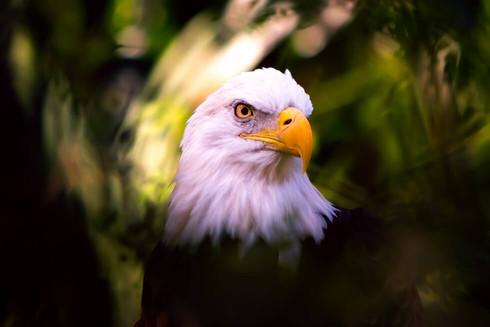 after-eagle.jpg