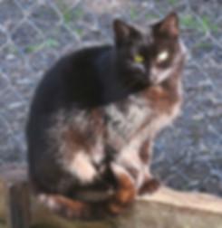 Black cat sitting in the sun