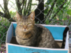 Tabby cat sitting in a box
