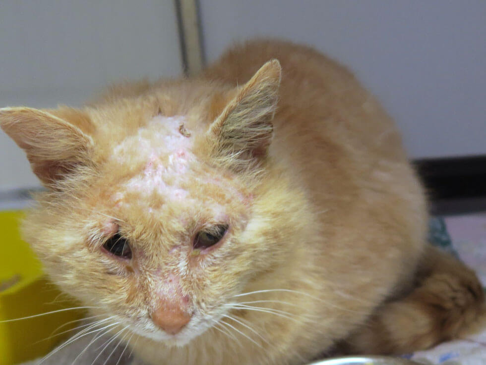 Neglected cat looking for home