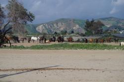Beautiful Corona,CA Hart Ranch