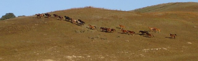 Hart Horses on Trail