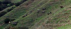 Hart Ranch Pasture