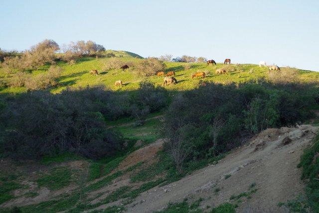 Hart Pasture