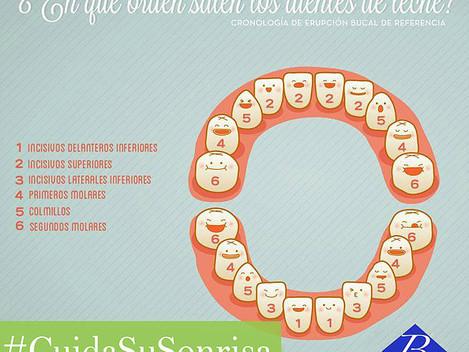 ¿En qué orden salen los dientes de leche?