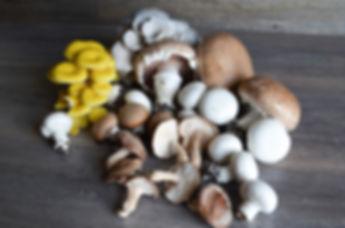 Texas Mushroom Farm | Kitchen Pride