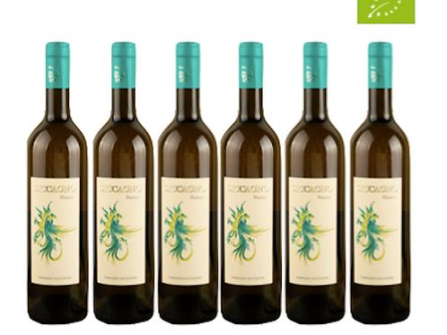 6 bottiglie - Vino Bianco SICCAGNO 2018 - Maria Baccellieri
