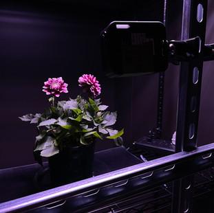 inginuitive solution camera mount