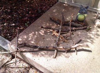 #25: Stacking stones and sticks (also, a snake)