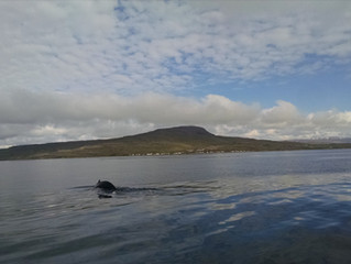 #30 Iceland Part 4: My heart overboard (Whale Watching)