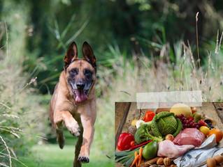 NUTRIZIONE ANTI-AGING NEL CANE E NEL GATTO