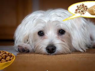 Rifiuto del cibo: cosa fare quando il cane non mangia? 5 semplici e utili consigli