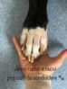 Anno Nuovo: 5 buoni propositi per i proprietari di cani e gatti