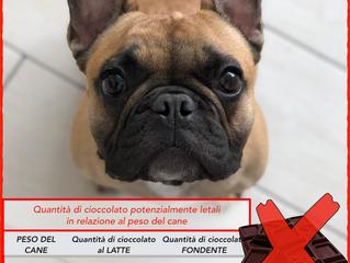 CIOCCOLATO PER IL TUO CANE? NO GRAZIE!!