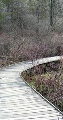Tamarack Trail.jpg