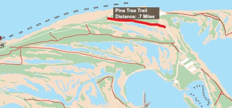 Pine Tree Trail.jpg