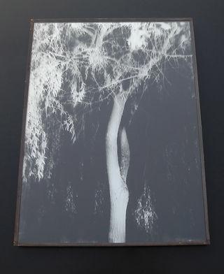 Marie Rameau woody galerie