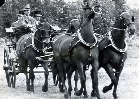 Philip during a carriage driving competition 