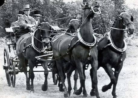 Philip during a carriage driving competition ​