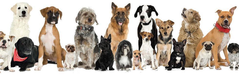 Dog-Adoption1.jpg