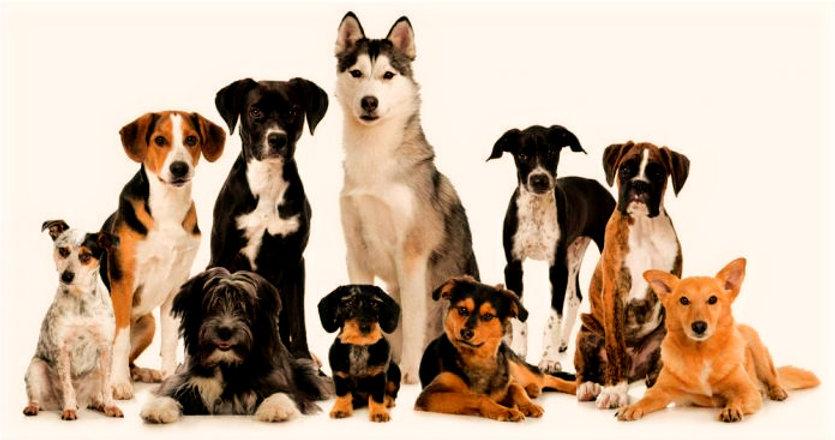 dogbanner_edited.jpg