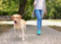 dogwalk_edited.jpg