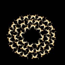 Majestic Spiral 2017